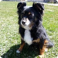 Adopt A Pet :: Payton - Diamondville, WY