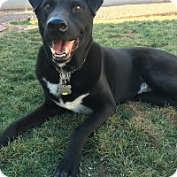 Adopt A Pet :: Smokey - Chandler, AZ