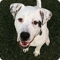 Adopt A Pet :: Dallas - Knoxville, TN