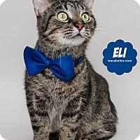 Adopt A Pet :: Eli - Wyandotte, MI