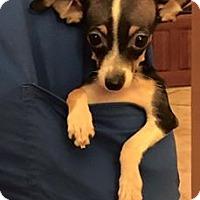 Adopt A Pet :: Stanwick - Phoenix, AZ