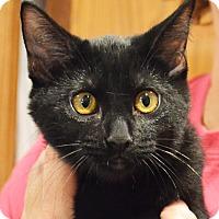 Adopt A Pet :: Poppy - Lincoln, NE