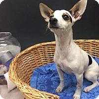 Adopt A Pet :: Shirley - Decatur, AL