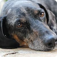 Adopt A Pet :: Roo - Marcellus, MI