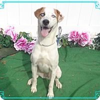 Adopt A Pet :: LACEY - available 9/20 - Marietta, GA