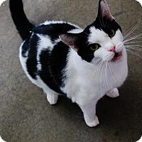 Adopt A Pet :: Megan - Odessa, TX