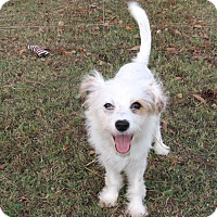 Adopt A Pet :: NEVAEH - Newburgh, NY