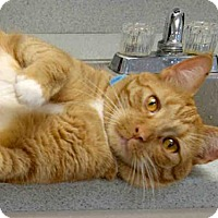 Adopt A Pet :: MARTY MCFLY - Canfield, OH