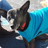 Adopt A Pet :: Ava - Madison, AL