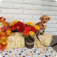 Adopt A Pet :: CIDER - Phoenix, AZ