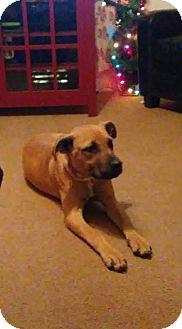 Labrador Retriever Mix Dog for adoption in Manhasset, New York - Cody