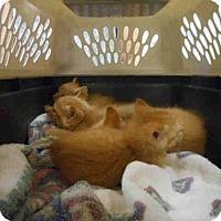 Adopt A Pet :: TATERTOT - Louisville, KY