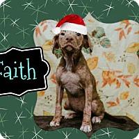 Adopt A Pet :: *FAITH - Sugar Land, TX