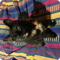 Adopt A Pet :: Khailee - Davis, CA