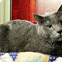 Adopt A Pet :: Achilles - Cedar Rapids, IA