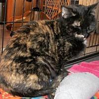 Adopt A Pet :: Hootenanny - Lacon, IL