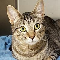 Adopt A Pet :: Rosy - Lago Vista, TX