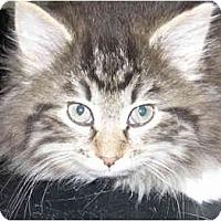 Adopt A Pet :: Caden - Catasauqua, PA