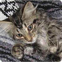 Adopt A Pet :: Zorro - Catasauqua, PA