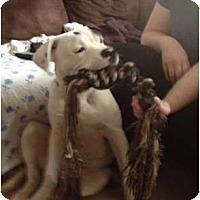 Adopt A Pet :: Titan - Clay, NY