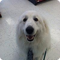 Adopt A Pet :: McKinley - New Boston, NH