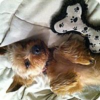 Adopt A Pet :: Rango - Clearwater, FL