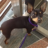 Adopt A Pet :: Zak (Courtesy Posting) - Malaga, NJ