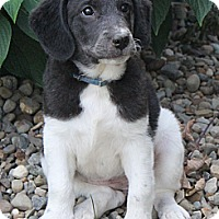 Adopt A Pet :: Blanche - North Olmsted, OH
