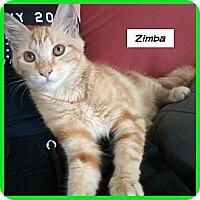 Adopt A Pet :: Zimba - Miami, FL
