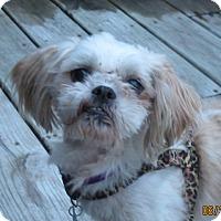 Adopt A Pet :: FINN-PENDING - Eden Prairie, MN