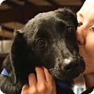 Adopt A Pet :: John Lee