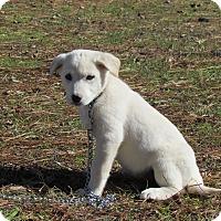 Adopt A Pet :: REAGAN - Bedminster, NJ