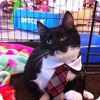 Adopt A Pet :: Jodi - Horsham, PA