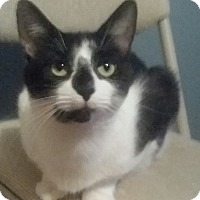 Adopt A Pet :: Sabrina - Cleveland, OH