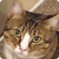 Adopt A Pet :: Sevillana'14 - New York, NY