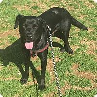 Adopt A Pet :: Desna - Alexandria, VA