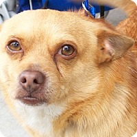 Adopt A Pet :: Sigmund - Castro Valley, CA