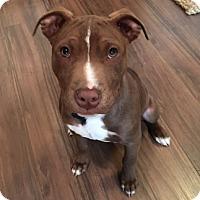 Adopt A Pet :: Vince-Adopted! - Detroit, MI