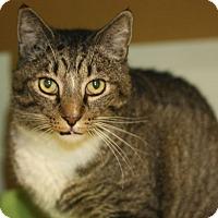 Adopt A Pet :: Judge - Canoga Park, CA
