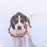 Adopt A Pet :: Savannah - Loomis, CA