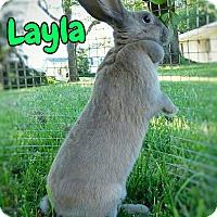 Adopt A Pet :: Layla - Elizabethtown, KY