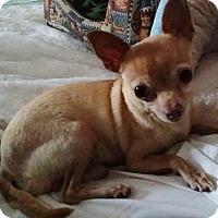 Adopt A Pet :: HOLISTER - Inland Empire, CA