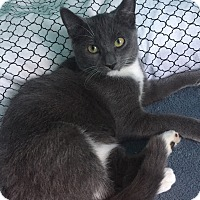 Adopt A Pet :: Joey - Staten Island, NY