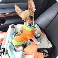 Adopt A Pet :: Tucker - Rancho Santa Fe, CA