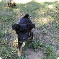 Adopt A Pet :: Bear - Tiptonville, TN