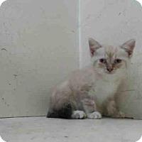 Adopt A Pet :: *CRANBERRY - Orlando, FL