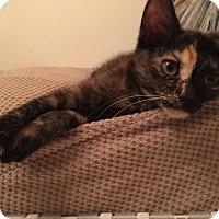 Adopt A Pet :: Mattie - Cincinnati, OH