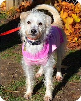 Terrier (Unknown Type, Medium) Mix Dog for adoption in Huntington, New York - Vanilla