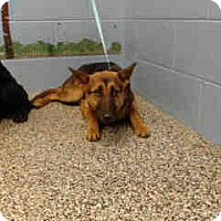 Adopt A Pet :: URGENT ON 12/6  San Bernardino - San Bernardino, CA