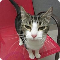 Adopt A Pet :: Bouncer - Kingston, WA